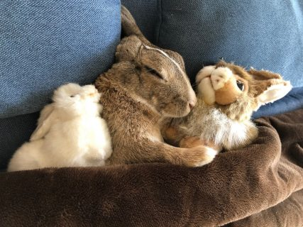 ウサギのムクジだけどちょっと風呂と天気の話をしてみる