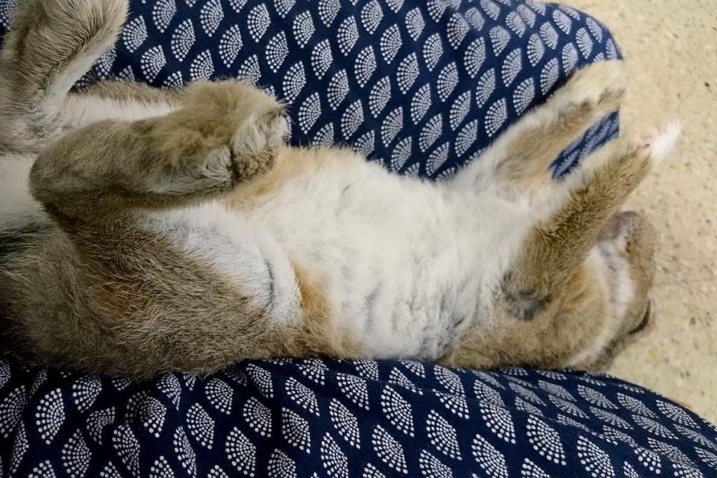 ウサギのムクジなんだけどちょっと風呂と天気の話をしてみる