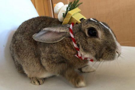 🐰ムクジ画像🐰新年のご挨拶🐰